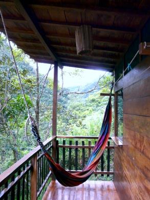 copalinga-hammock-podocarpus-bombuscaro-lores