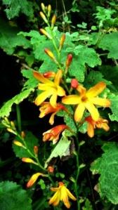 Orangey Flower