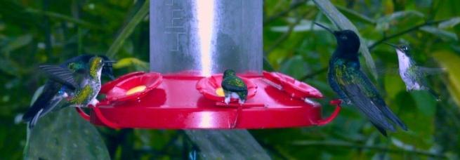 feeder-scene-5-hummers-shrunken