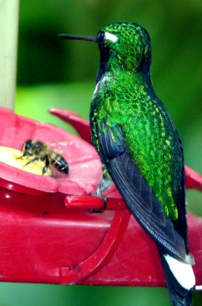 sharing-feeder-with-a-bee-shrunken