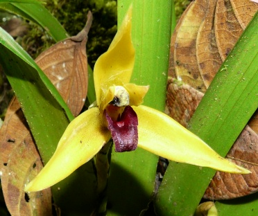yellow-orchid-orchidarium-mindo-shrunken