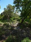 Creek in Ngongorogoro Crater