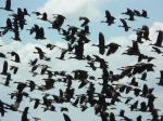 Flight of birds  - Lake Manyara National Park
