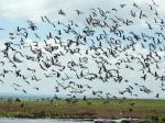 Flight of birds  - Lake Manyara National Park