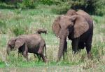 Elephants  - Lake Manyara National Park