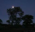 Moonrise Home sweet home for 3 days  - Serengeti