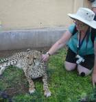 Val and the cheetah - Namibia