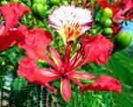 Flowers-Reptiles-Etc of Africa-07